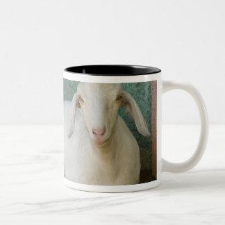 Nicaragua, Granada. Goat resting on porch in Two-Tone Coffee Mug