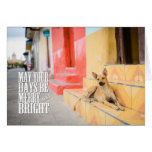 Nicaragua Street Dog Greeting Card