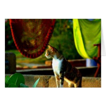 Beach Themed Nicaraguan Beach Kitty with Hammock Card