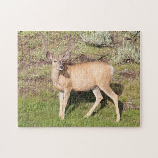 Nice Buck Deer in Velvet at Yellowstone Jigsaw Puzzle