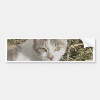 Nice Kitty Bumper Sticker