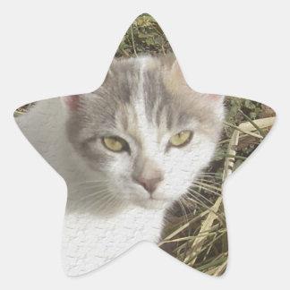 Nice Kitty Star Sticker