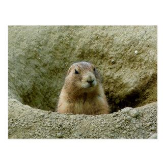 Nice Little Marmot Postcard