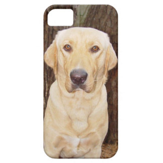 Nice Looking Yellow Lab iPhone 5 Covers