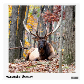 Nice Photo of a Bull Elk resting in the fall. Wall Decal