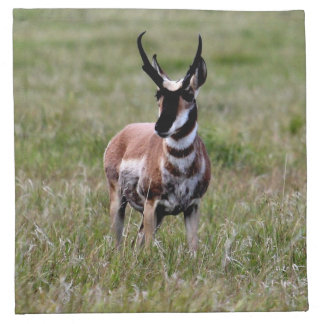 Nice Pronghorn in a green field. Cloth Napkin