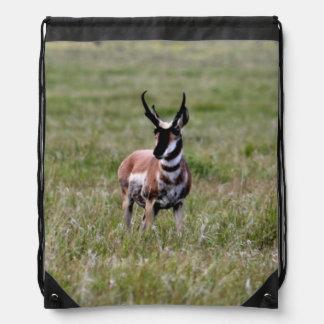 Nice Pronghorn in a green field. Cinch Bags
