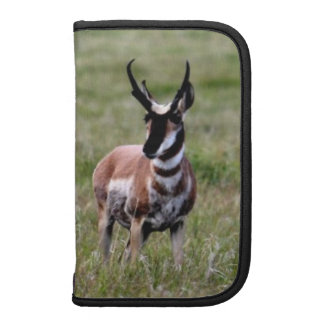 Nice Pronghorn in a green field. Organizers