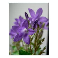 Nice Purple Flowers Post Cards