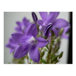 Nice Purple Flowers Postcard
