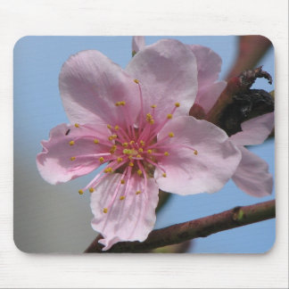 Nice Raspberry Bloom Mouse Pad