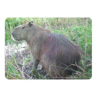Nice Shot of Wild Capybara In Weeds 5x7 Paper Invitation Card