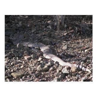 Nice Size Rattlesnake Postcard