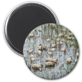 Nice Weather For Ducks 2 Inch Round Magnet