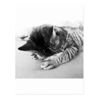 nicely cat sleeps on the bed sweetly postcard