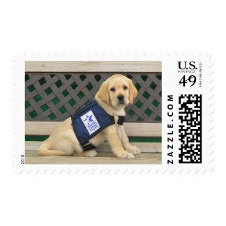 Nick stamps