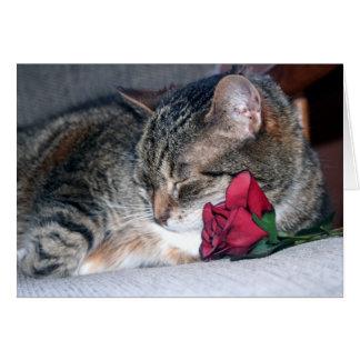 Nicky y un color de rosa tarjeta de felicitación
