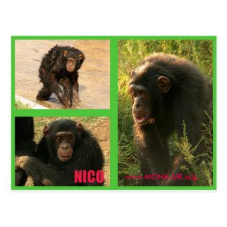 Nico Post-card Postcard