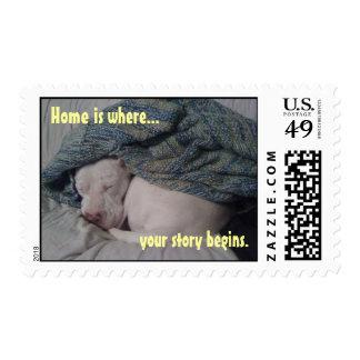 Nico Stamps