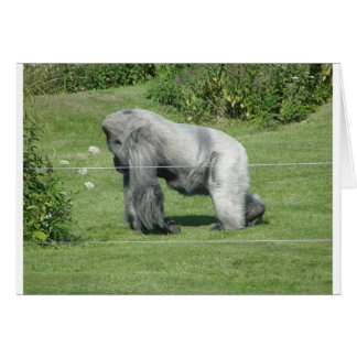 Nico - The Gorilla Card