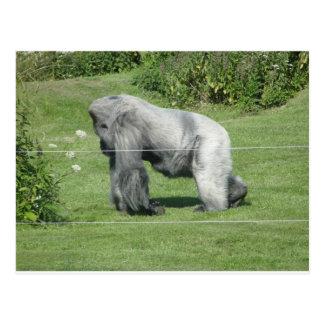 Nico - The Gorilla Postcard