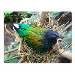 Nicobar Pigeon on Nest Wildlife Series # 21 Postcards