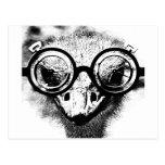 Nicolaus la avestruz en gráfico negro y blanco postales