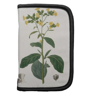 Nicotiana from 'Phytographie Medicale' by Joseph R Folio Planners