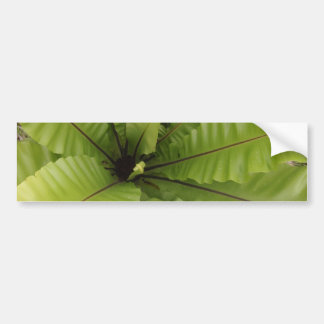 Nidus verde del Asplenium del helecho Pegatina De Parachoque