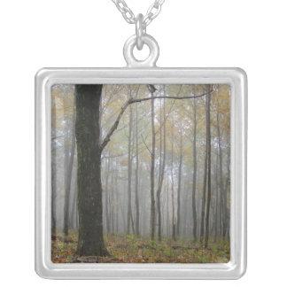 Niebla a través del collar de los árboles
