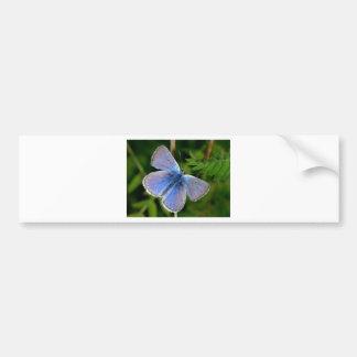 niebla azul melenuda de las mariposas pegatina para auto
