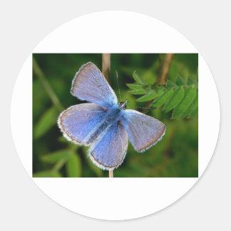 niebla azul melenuda de las mariposas pegatina redonda