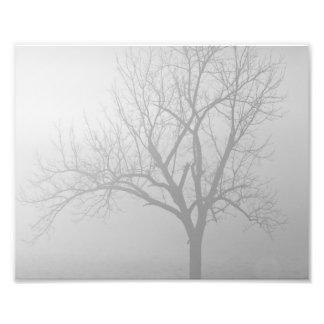 Niebla de la mañana cojinete