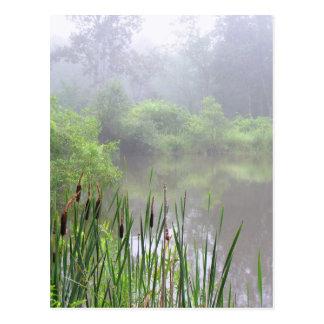 Niebla de la mañana en la charca postal