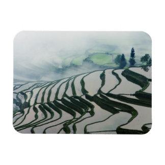 Niebla de la mañana sobre campos del arroz iman