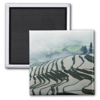 Niebla de la mañana sobre campos del arroz imán cuadrado
