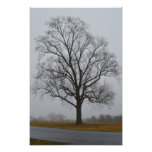 Niebla de la sombra del árbol cojinete