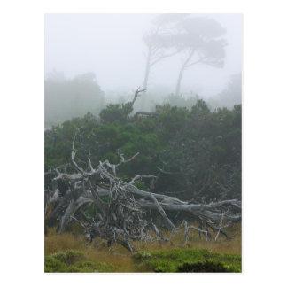 Niebla de Monterey Postales