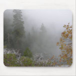Niebla en el Forrest Tapetes De Ratones