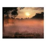 niebla en prado tarjetas postales