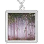 Niebla entre los árboles de pino en la salida del  joyeria