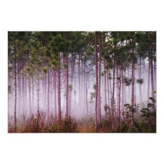 Niebla entre los árboles de pino en la salida del  fotografía