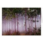 Niebla entre los árboles de pino en la salida del  tarjetón