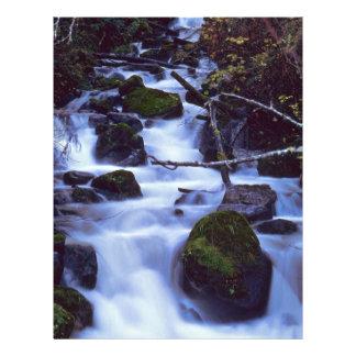 """Niebla flotante en las rocas folleto 8.5"""" x 11"""""""