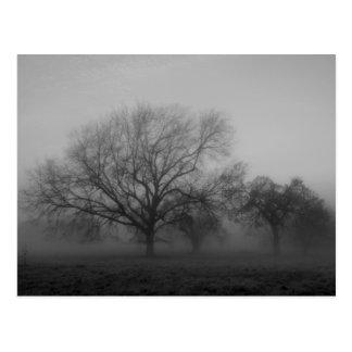 Niebla que frecuenta postal