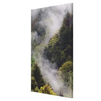 Niebla que sube de la ladera después de lluvia de  impresiones de lienzo