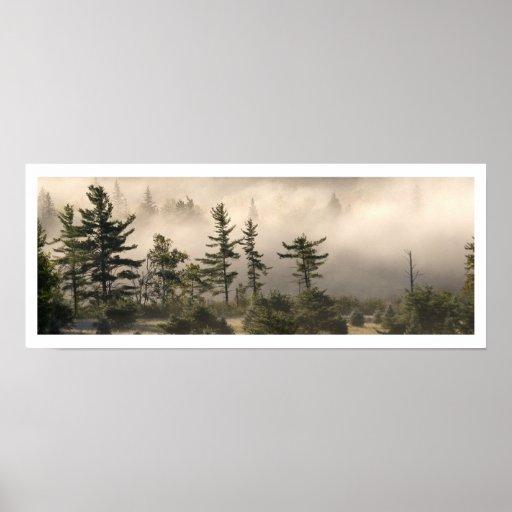 Niebla y coníferas por la mañana póster
