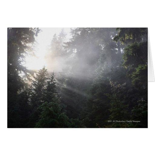 Niebla y haces de Sun en un bosque de Washington Tarjeta De Felicitación
