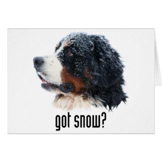 ¿nieve conseguida? Perro de montaña de Bernese Tarjeta De Felicitación