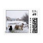 Nieve de las ovejas en abril envio